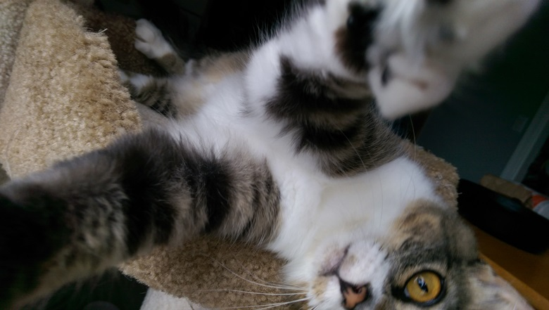isabel-IMAG6552-selfie-edited