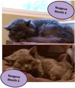 nuageux-month4-month5