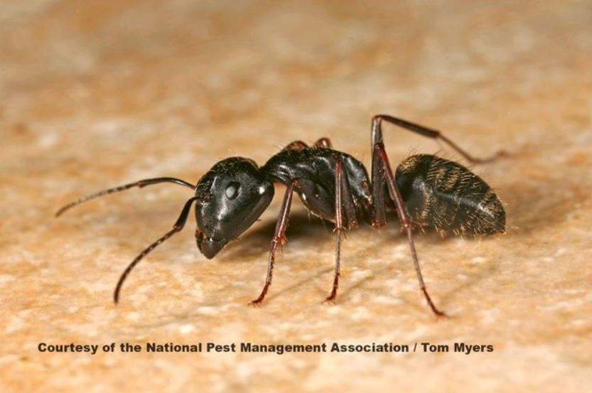 ant-natl-pest-mgmt-assoc