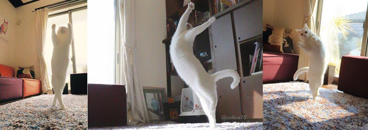 ballet-cat-clump