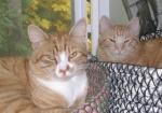 Steven & Saffron (2009)