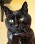 Meek  (1994-2009)