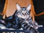 Meek and Snicklefritz  (1994-2010)